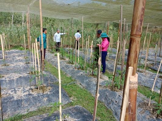 Thường trực HĐND xã Đồng Tiến giám sát tiến độ triển khai mô hình thí điểm sản xuất rau quả an toàn