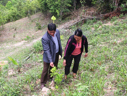 Gia đình anh Lý Văn May, thôn Bản Cậy, xã Tụ Nhân (Hoàng Su Phì) thực hiện cải tạo vườn tạp, trồng cây ăn quả.